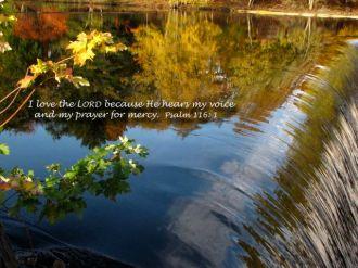 Psalm 116.1